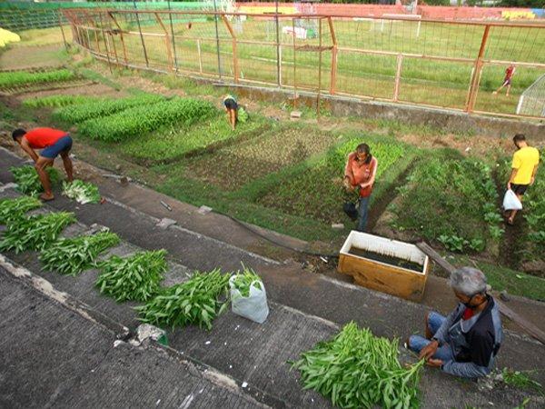 Markasnya Jadi Kebun Sayur, Manajemen PSM Makassar Justru Tidak Tahu